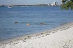 dog beach miami beach