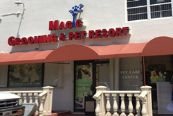 magic grooming and pet resort pet boarding and grooming in miami beach