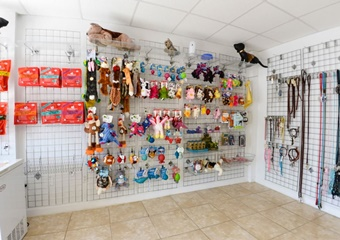 pet daycare in miami beach