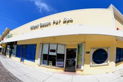 miami beach pet daycare